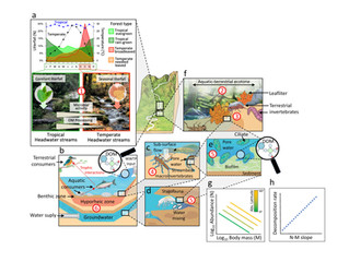 An integrative perspective to predict the performance of the riverine bioreactor