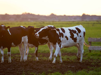 The Midwest: Land of Cows, Corn and… Life Sciences?