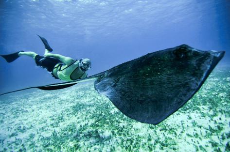 Gibb's Cay Stingray Encounter