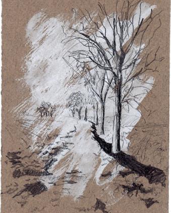 path and tree line.jpg