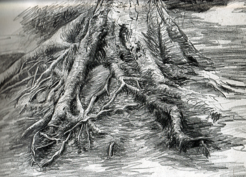 tree study.jpg