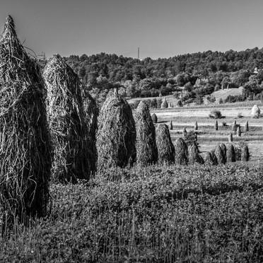 Gardiens des collines