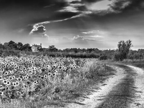 Chemin de Vincent