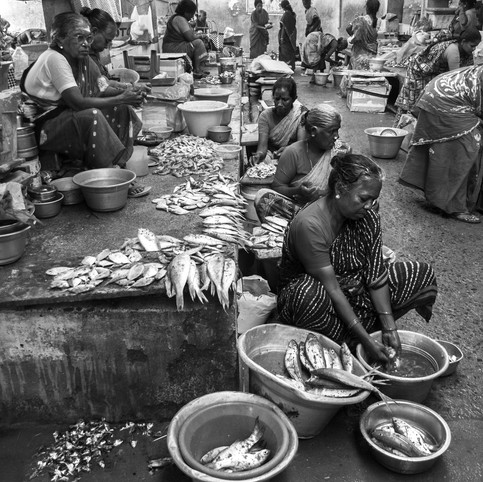Poissons de Pondichery