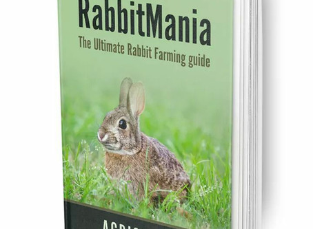 Rabbit Farming: Knowing your Rabbit's Gender