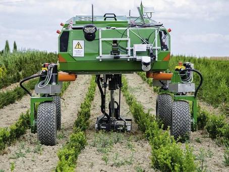 MEET  THE WEEDING ROBOT
