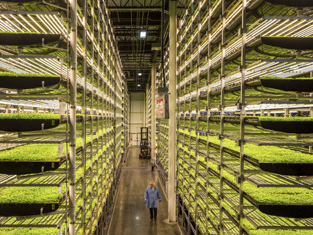 VERTICAL FARMING: What You Need to Know