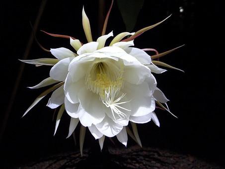 БЛЕСК НОВИЗНЫ (странные цветы перед сном)