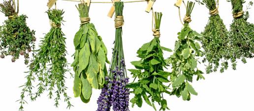 Erbe aromatiche contro le patologie neurodegenerative