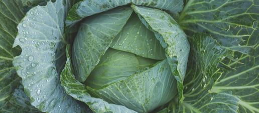 Le proprietà benefiche del cavolo verde scientificamente provate