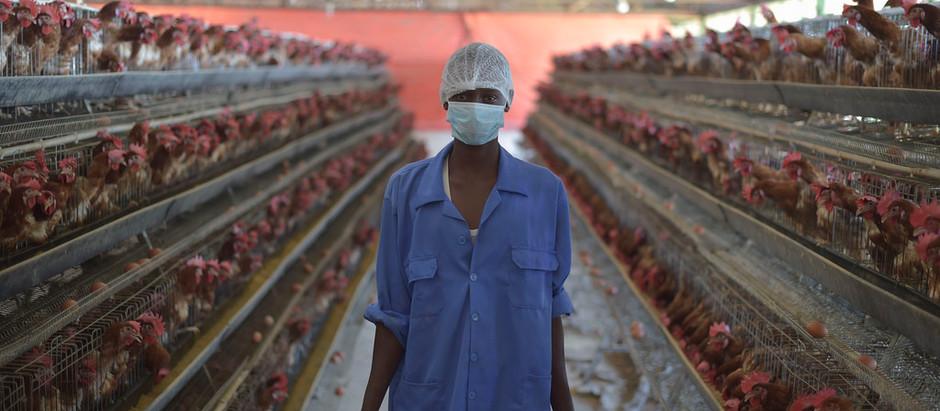 Abolire gli allevamenti intensivi per prevenire pandemie future