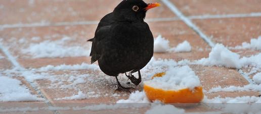 Fai bene a mangiare la neve?