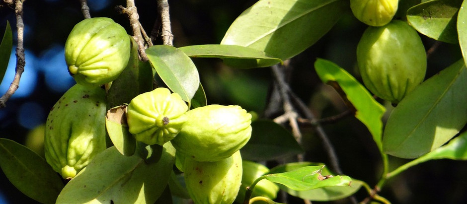 La Garcinia cambogia ti aiuta a dimagrire più velocemente?