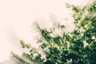 Swirly Branches