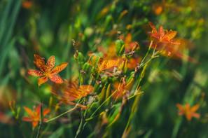 Flower Fire