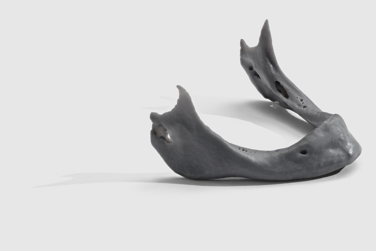 grey_mandible
