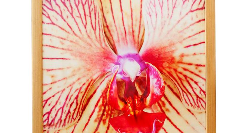 """""""Phalaenopsis Orchid"""", (2011)"""