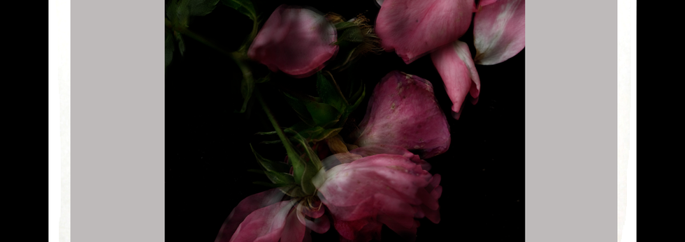 """""""Syncope"""", (2014). From """"The Briar Rose"""""""