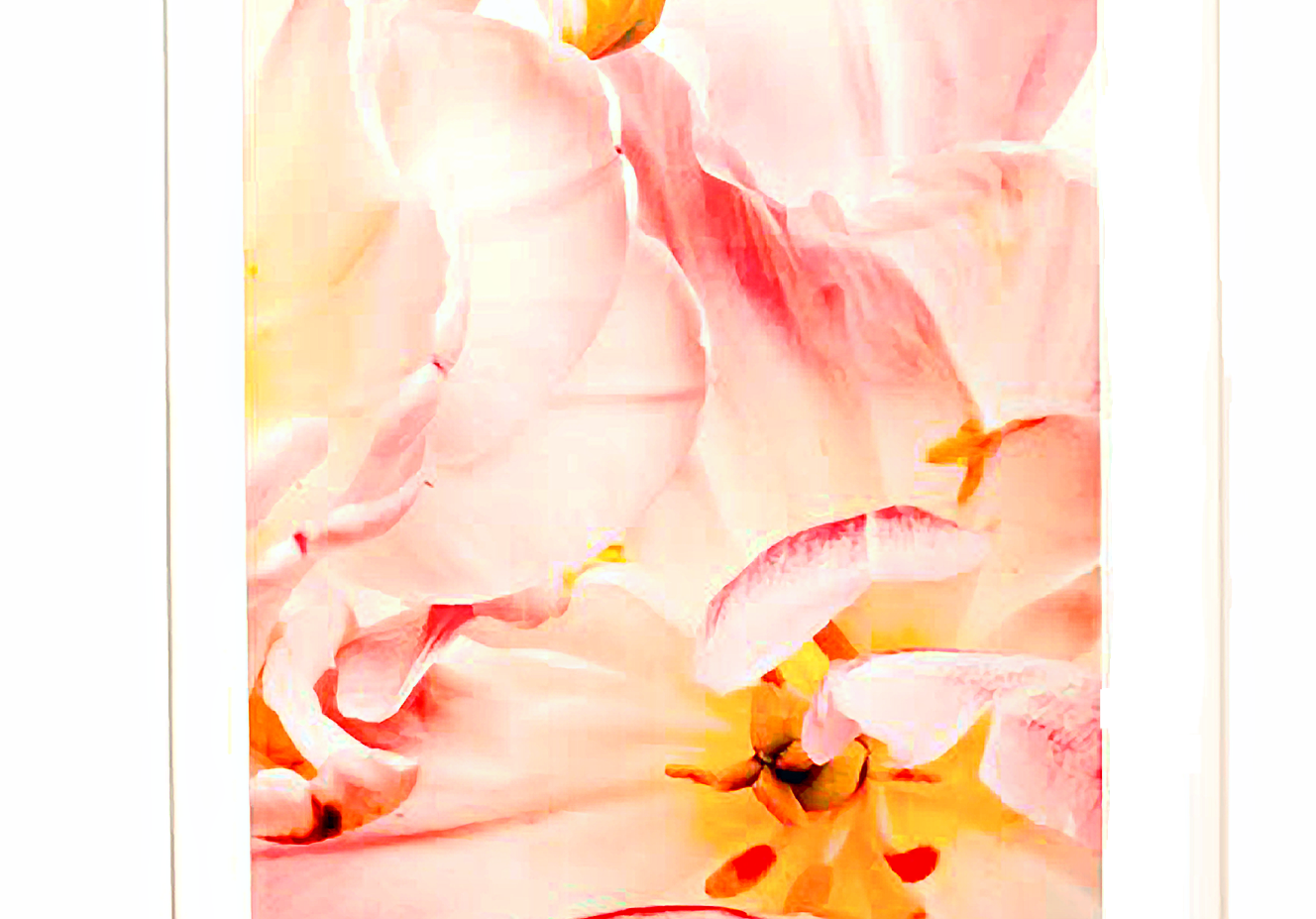 """""""Rococo: Pink Tulips"""" (2011)"""