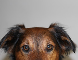 Knox - Mint brand pup