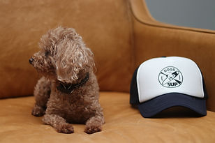 dogs that SUP trucker hat