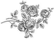roses%20valentines%20sml_edited.jpg