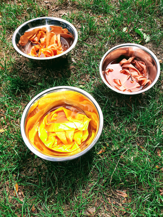 Making natural dyes using avocado skins and pits, onion skins, tumeric, and Yorkshire tea.