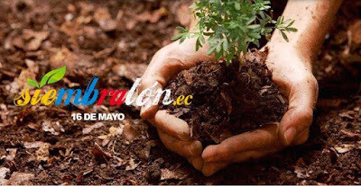 Siembratón, récord Guinness en Ecuador tras una reforestación de 647.250 plantas