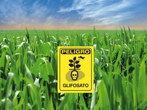 Usar glifosato antes de la cosecha contamina los alimentos infantiles