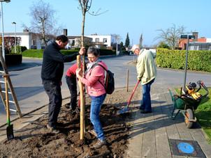 Help onze nieuwe bomen door de droge periode
