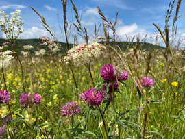 Enjoy the wild flowers meadows