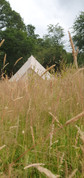 Our bell tents have a meadow all to themselves...