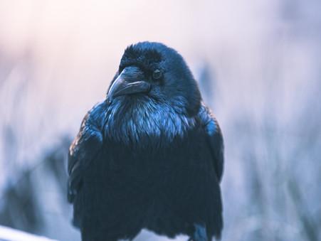 FAIRYTRAILS #7: Crow