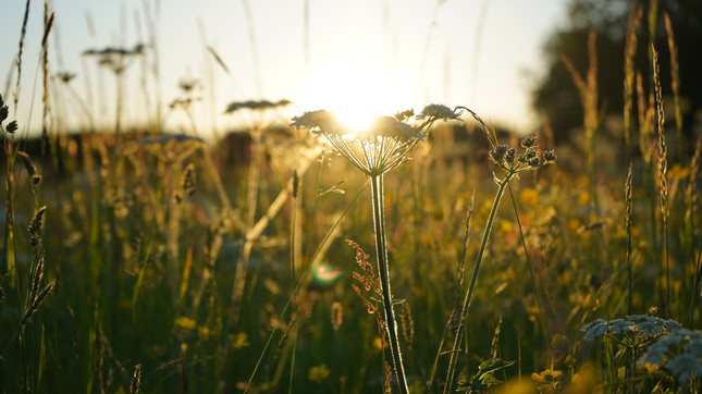 Take a walk in the wild flower meadows...