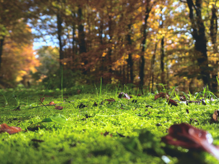 ADVENTURE PARENTING #3: LOWER WOODS NATURE RESERVE, WICKWAR