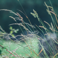 Lie in the meadow grass...