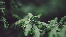 FAIRYTRAILS #8: Oak