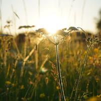 Wild flower meadows...