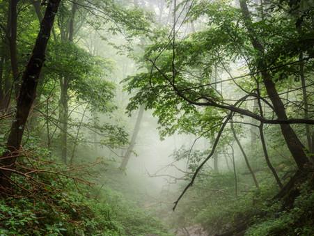 FOLKTRAILS #2: TREES, SEEDS & RIVERS OF MILK