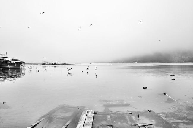 foggy birds...