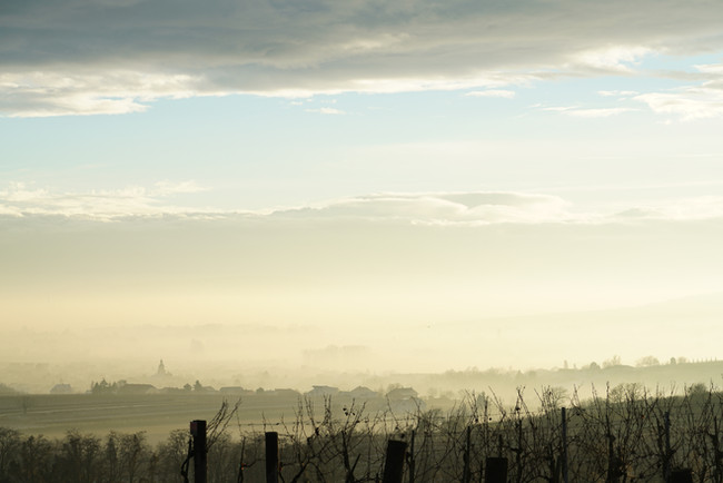 Late afternoon in the vineyards