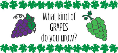 What kind of grapes do you grow?