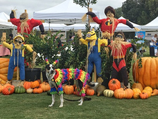 25th Annual DAWG Walk & Pet Faire