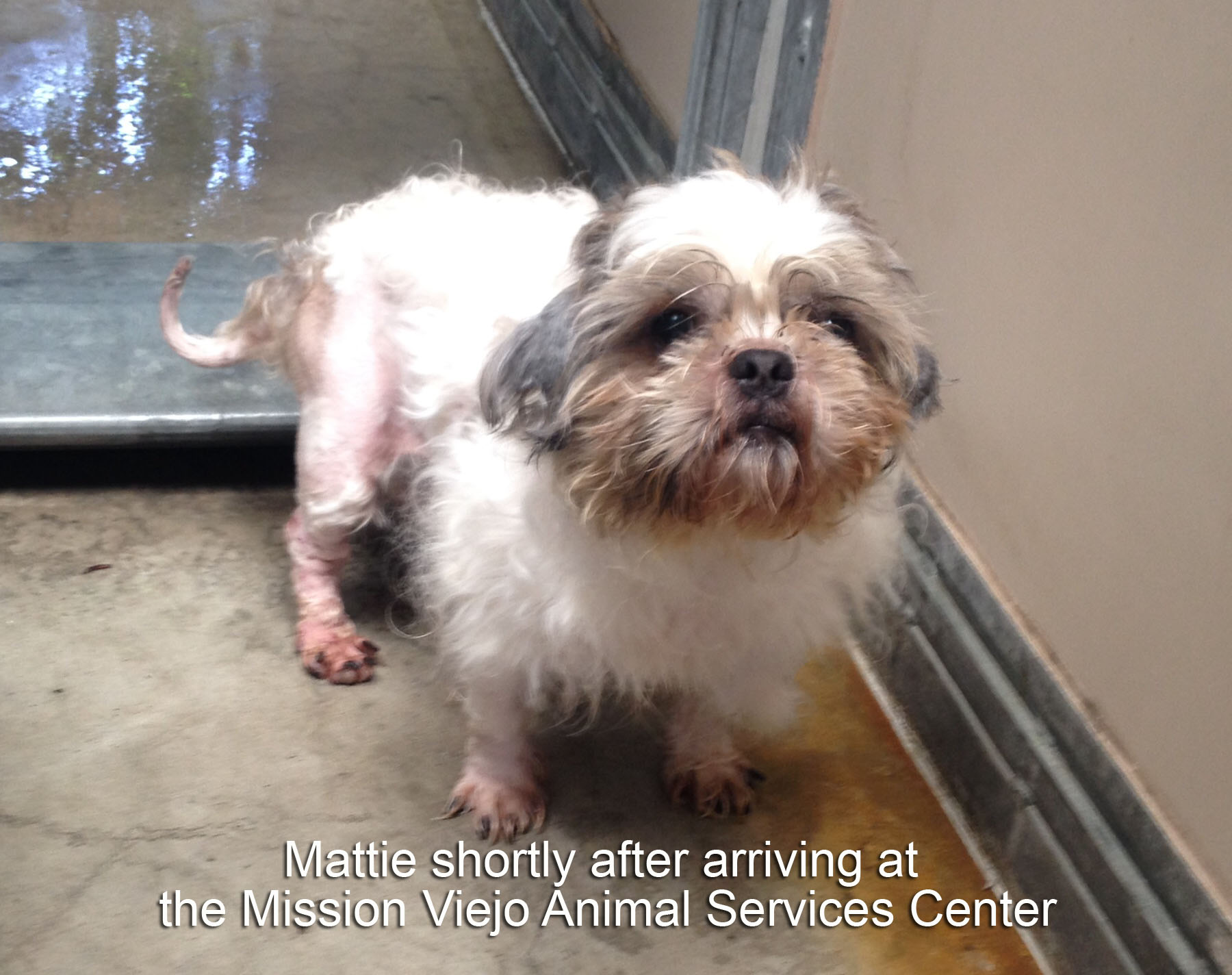 Mattie Shortly After Rescue