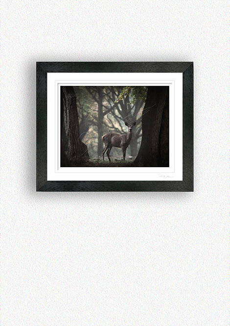 Hind Fine Art Print Mounted in Black Frame