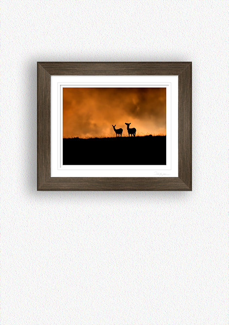 Deer Silhouettes Fine Art Print Mounted in Brushed Bronze Frame