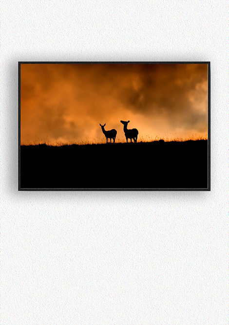 Deer Silhouettes Fine Art Print Mounted in Box Frame