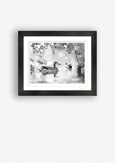 Black and White Fine Art Print Mounted in Black Frame
