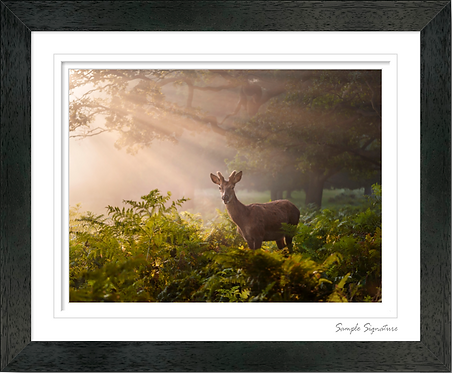 Buck in the Morning sun rays 12x10 Inch Traditional Frame
