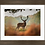 Thumbnail: Posing Stag in 16x12 Inch Frame.
